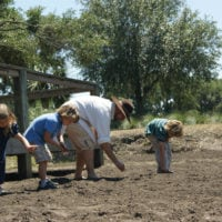 Hands On Rice Planting at Middleton Place: April 28, 2018