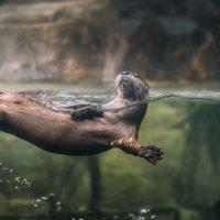 Visit the South Carolina Aquarium!