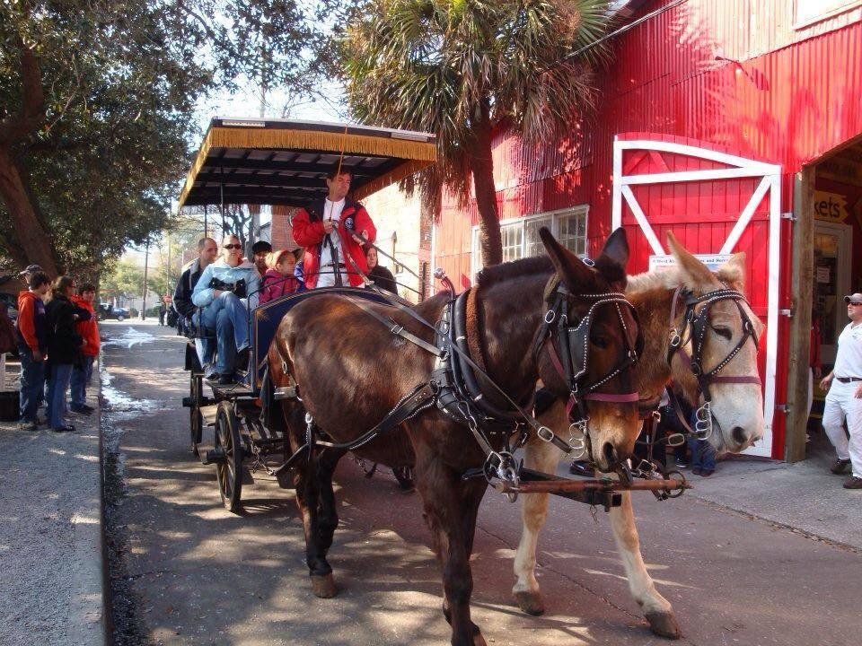 carriage palmetto tours    charleston gateway