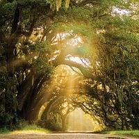Maybank Highway to Wadmalaw Island!